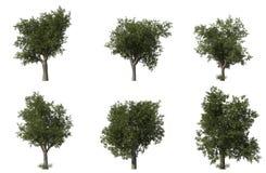 Group of 6 CG oak trees Royalty Free Stock Photos