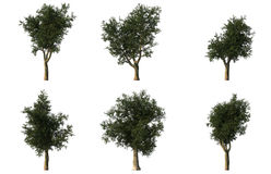 Group of 6 CG platanus trees Royalty Free Stock Photos