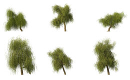 Group of 6 CG willow trees Royalty Free Stock Photos