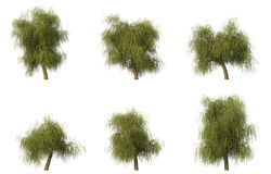 Group of 6 CG willow trees Stock Photos