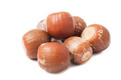 Group of acorns Stock Image