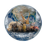 Group of africa animal with planet earth Royalty Free Stock Image