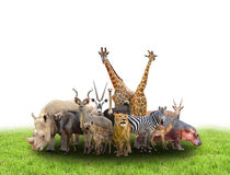 Group of africa animals royalty free stock image