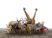 Group of africa animals stock images