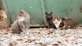 Group of alley cats sitting near trash dumpster and looking about stock footage