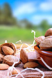 Group of almonds on a table in the field vertical composition Stock Image