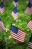 Group of American flags in green grass. Group of American flags outside in green grass Royalty Free Stock Photos