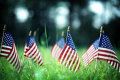 Group of American flags in green grass. Group of American flags outside in green grass Royalty Free Stock Images