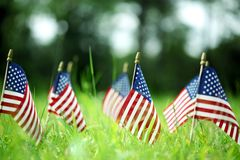 Group of American flags in green grass. Group of American flags outside in green grass Stock Images