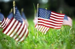 Group of American flags in green grass. Group of American flags outside in green grass Royalty Free Stock Photography
