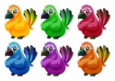 A group of angry birds. Illustration of a group of angry birds on a white background Royalty Free Stock Photo