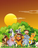 A group of animals at the forest stock illustration