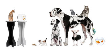 Group of animals in front of white background. Group portrait of animals in front of black and white background Stock Photo