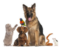 Group of animals in front of white background Royalty Free Stock Image