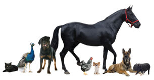 Group of animals. In front of white background Stock Photo