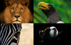 Group animals. On the postcard from zoo Royalty Free Stock Images