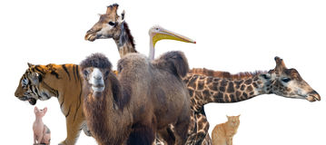 Group of animals Royalty Free Stock Image