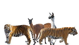 Group of animals Stock Photos