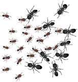 Group of ants. Illustration of various sized and colored ants isolated on white background vector illustration