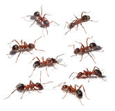 Group of ants collection Royalty Free Stock Images