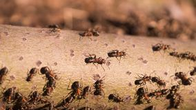 Group of the ants crawling and working