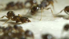 Group of ants on a kitchen