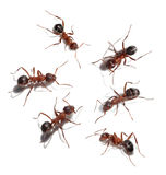 Group of ants meet royalty free stock photo