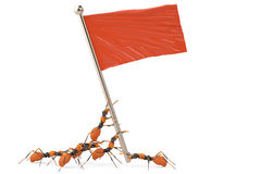 A group of ants with red flag.3D illustration. A group of ants with red flag 3D illustration Stock Image
