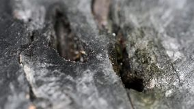 Group of ants on wood stock video