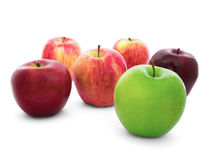 Group of apples varieties Isolate on White Royalty Free Stock Photography