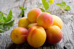 Group of apricot Royalty Free Stock Images