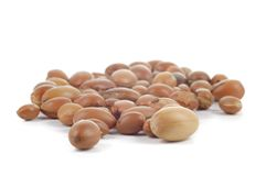 Group of argan nuts on white background. Royalty Free Stock Images
