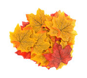 Group of artificial fall leaves on a white background. Royalty Free Stock Photo