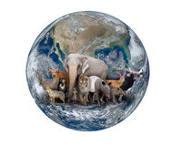 Group of asia animal with planet earth Stock Photography