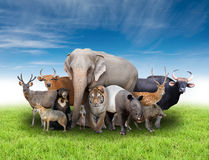 Group of asia animals Royalty Free Stock Photography