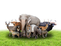 Group of asia animals Royalty Free Stock Images