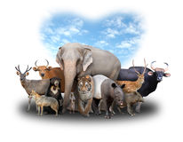 Group of asia animals Royalty Free Stock Photos