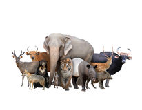 Group of asia animals Royalty Free Stock Image