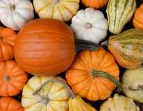 Group of assorted pumpkin, gourds and squash Stock Photos