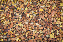 Group of autumn leaves Stock Photography