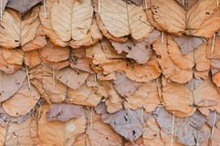 Group autumn orange leaves Royalty Free Stock Images
