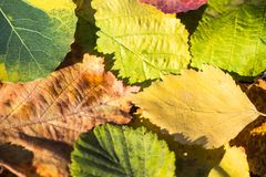Group autumn orange leaves. Outdoor. colorful background Stock Images