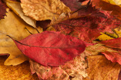 Group of autumnal leaves Stock Photos