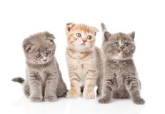 Group baby kittens sitting in front. isolated on white backgroun Stock Photo