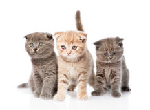 Group baby kittens sitting in front.  on white background Stock Photos