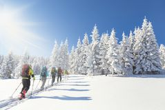 Group of backcountry skiers going up towards a snow covered chri. Group of 5 backcountry skiers going up towards a snow covered christmas tree forest on a Stock Images