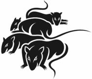 Group of bad rats. A group of bad rats in black and white solid colors Stock Photography