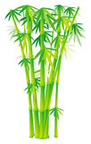 Group of bamboo stalks Royalty Free Stock Image