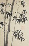 Group of bamboo trees Stock Images
