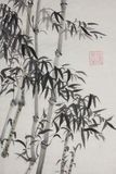 Group of bamboo trees Stock Photo